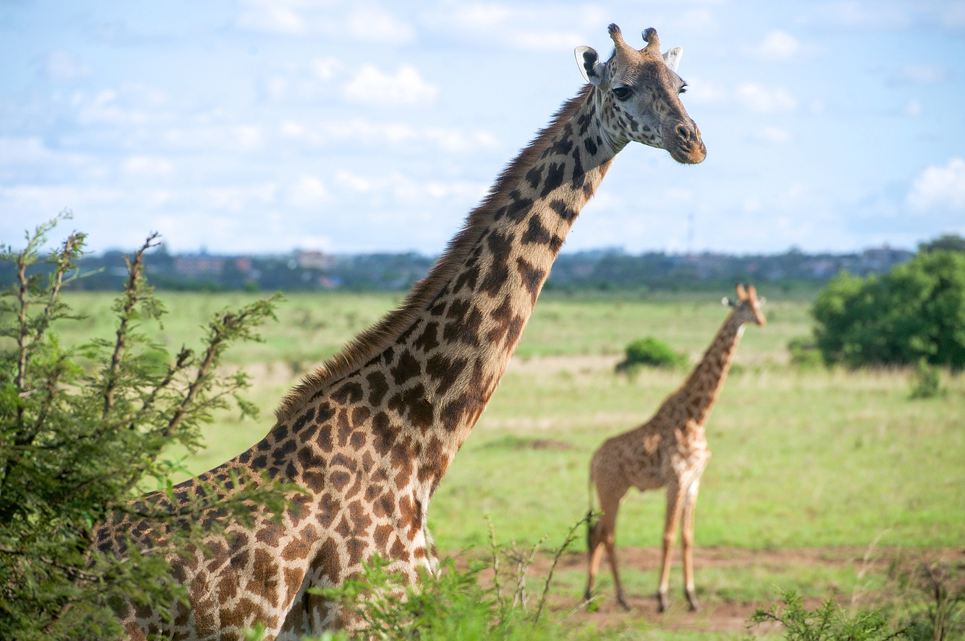 Cheap Business Class Tickets To Nairobi